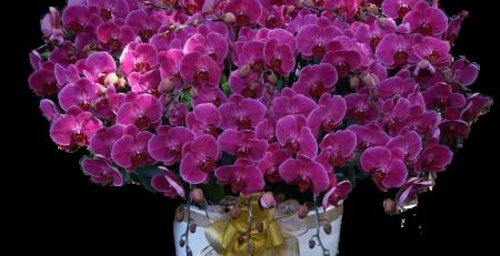 Toko bunga anggrek bogor