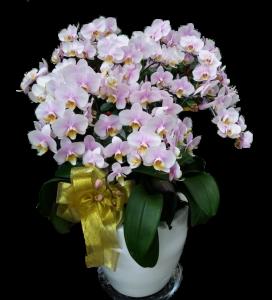 toko bunga anggrek tangerang