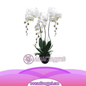 Bunga Anggrek Bulan AS AGR-002