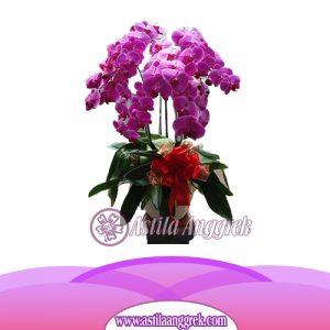 Bunga Anggrek Bulan AS AGR-005