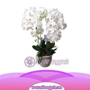 Bunga Anggrek Bulan AS AGR-010