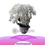 Bunga Anggrek Bulan AS AGR-013