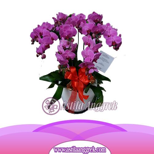 Bunga Anggrek Bulan AS AGR-015