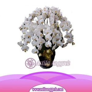 Bunga Anggrek Bulan AS AGR-017