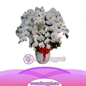 Bunga Anggrek Bulan AS AGR-019
