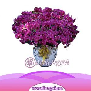 Bunga Anggrek Bulan AS AGR-022