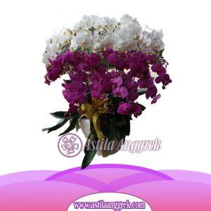 Bunga Anggrek Bulan AS AGR-023