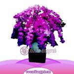 Bunga Anggrek Bulan AS AGR-029