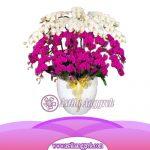 Bunga Anggrek Bulan AS AGR-030
