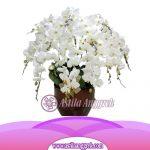 Bunga Anggrek Bulan AS AGR-031
