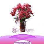 Bunga Anggrek Bulan Novelty AS AGR-011
