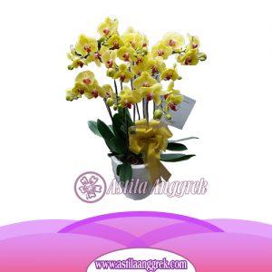 Bunga Anggrek Bulan Novelty AS AGR-016