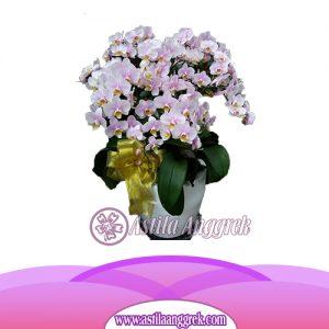 Bunga Anggrek Bulan Novelty AS AGR-018