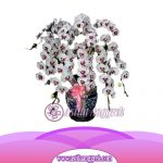 Bunga Anggrek Bulan Novelty AS AGR-020