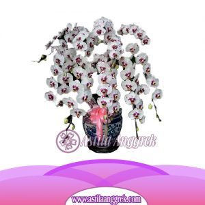 Bunga Anggrek Bulan Novelty AS AGR-020