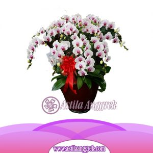 Bunga Anggrek Bulan Novelty AS AGR-021
