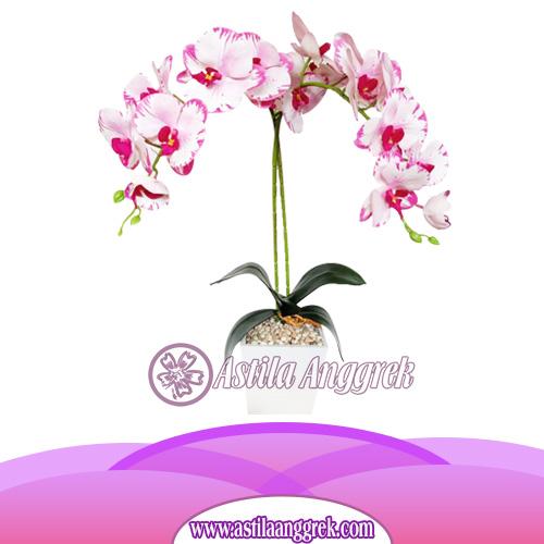 Bunga Anggrek Latex Artificial AS AGRL-006